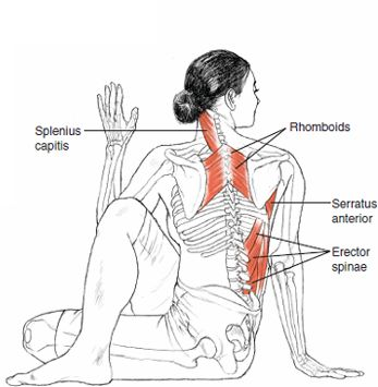 Ardha Matsyendrasana Half Lord of the Fishes Pose  B E N E F I T S — Stimulate...