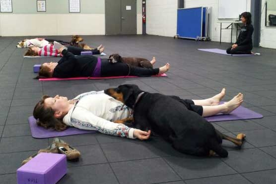 Our sister company, Morris K9 Campus' Doga class incorporates the dogs into po...