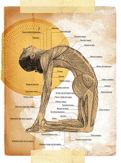 Yoga anatomy. I am going to take up yoga. Even if it doesn't help me lose we...