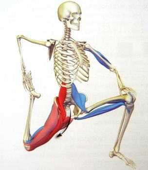 You can see here how the muscles from your legs attach to your lower spine.  If ...