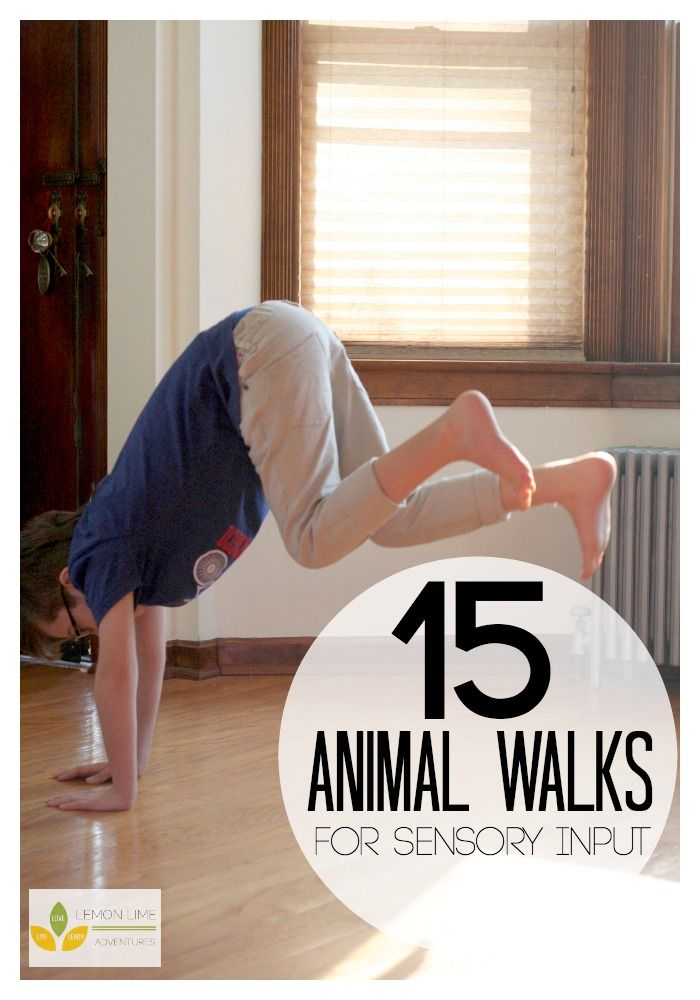 15 Animal Walks for Sensory Diet | Love these indoor kids exercises for getting ...