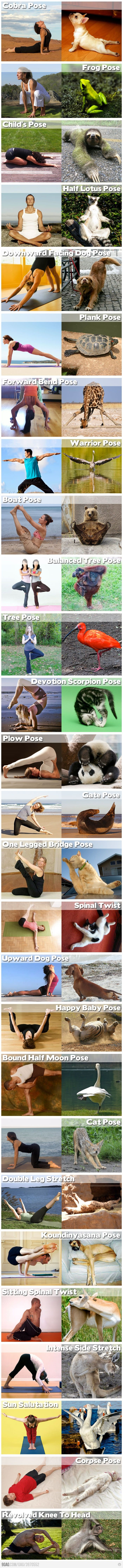 Animal Yoga Positions
