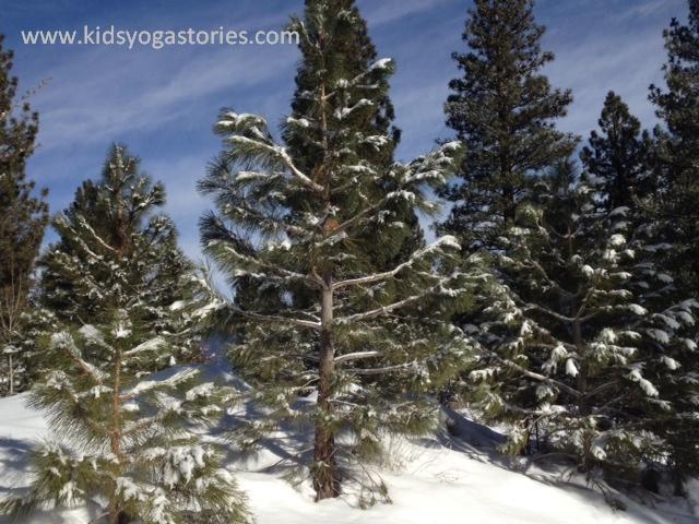 Pine Tree ~ Tree Pose