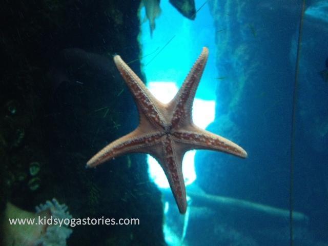 Sea Star ~ Resting (Corpse) Pose