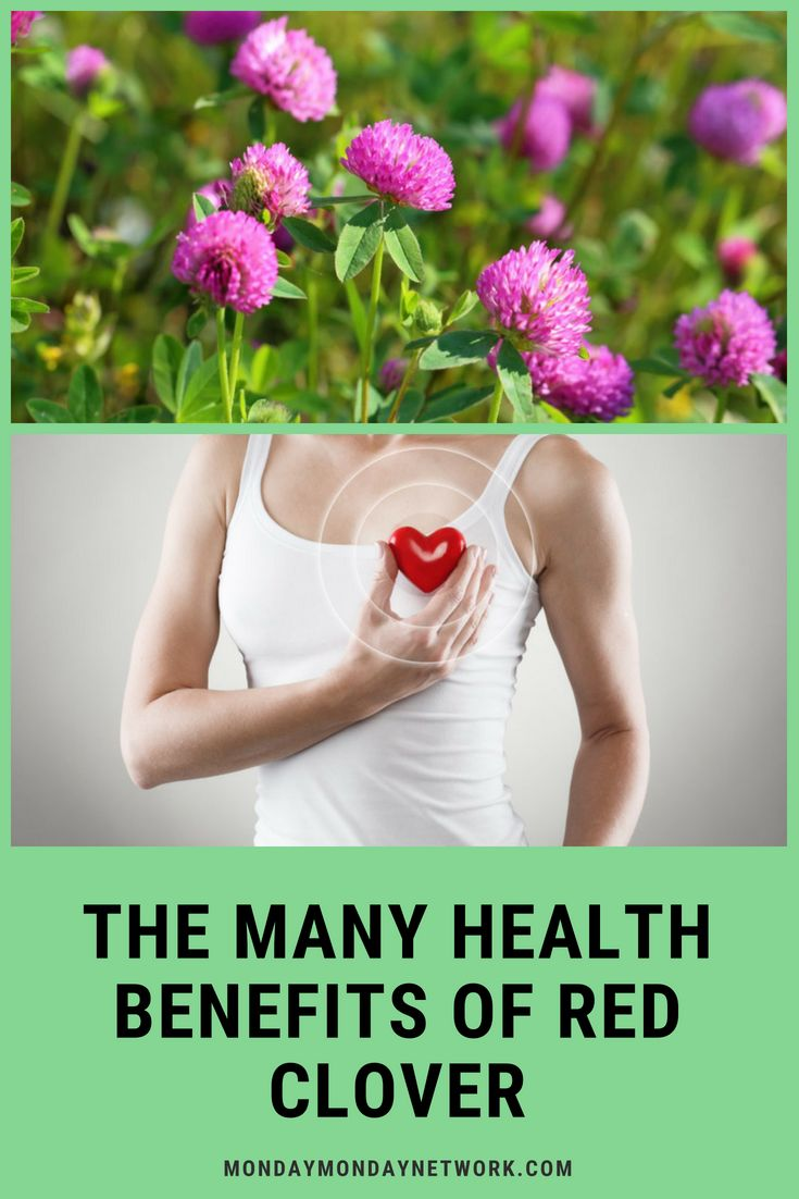 ShareAre you interested in herbal health? Red clover has some surprising health ...