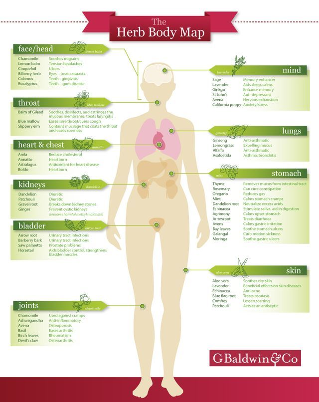 Specific herbs for specific parts of your body | Polly's Path to Health & Ha...