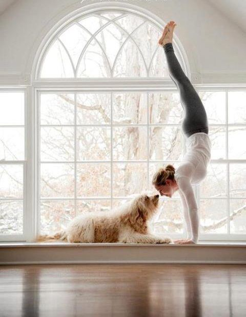 Handstands, puppies, and laughter. Doesn't get much better than that! www.stoneb...
