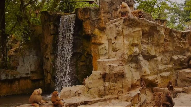Zoo Animal Yoga Poses for Kids (video)